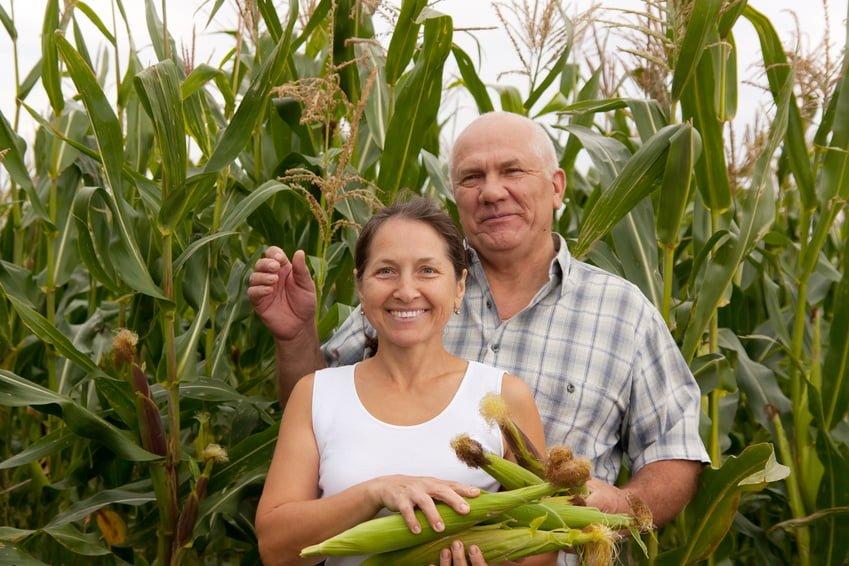 Un couple d'agriculteurs d'ici dans un champ de maïs