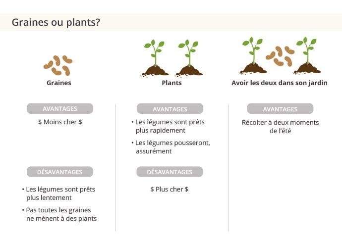 Acheter des graines ou des plants?