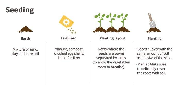 Seeding (Earth, fertilizer, planting layout, planting)