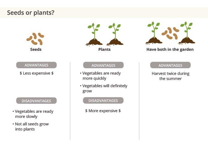 seeds or seedlings?