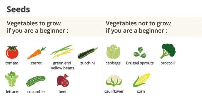 Vegetables to grow and to not grow if you when are a beginner