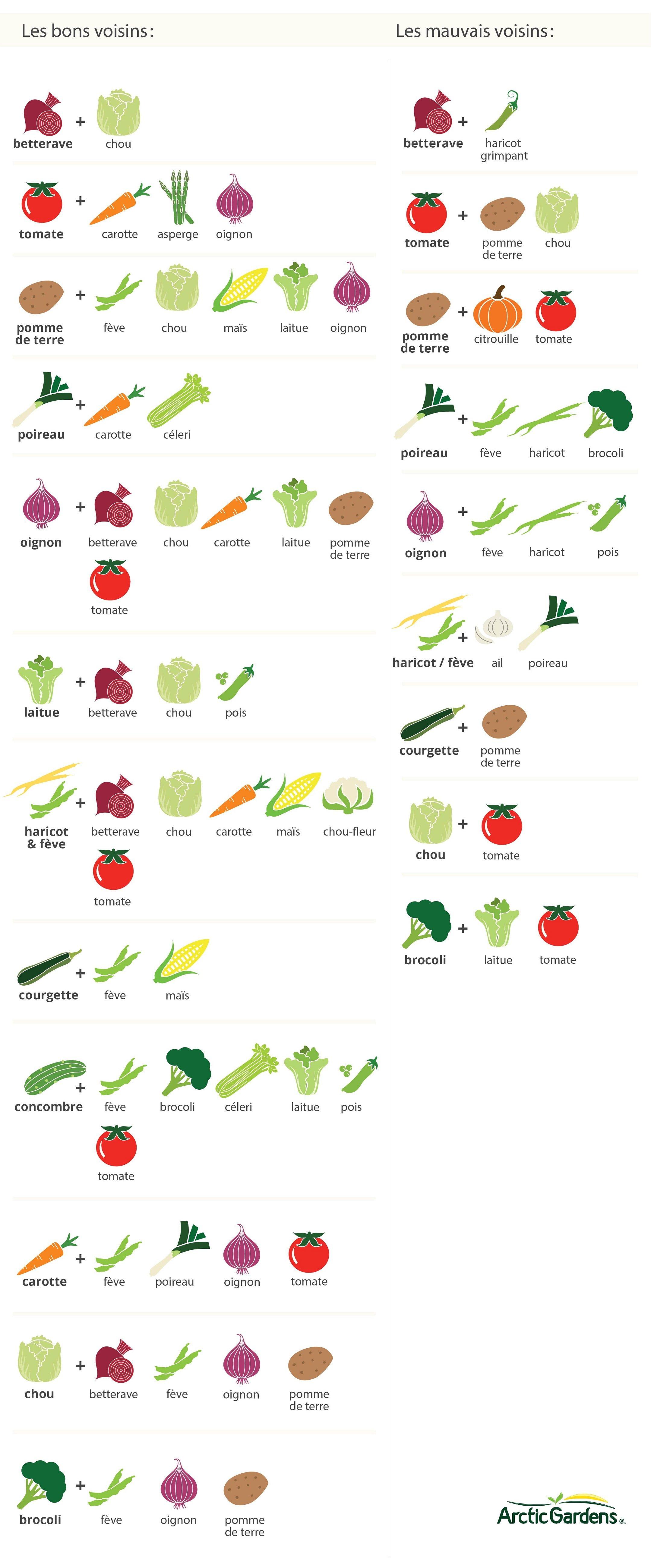 Quoi Mettre Au Potager En Septembre guide de jardinage pour débutants | arctic gardens