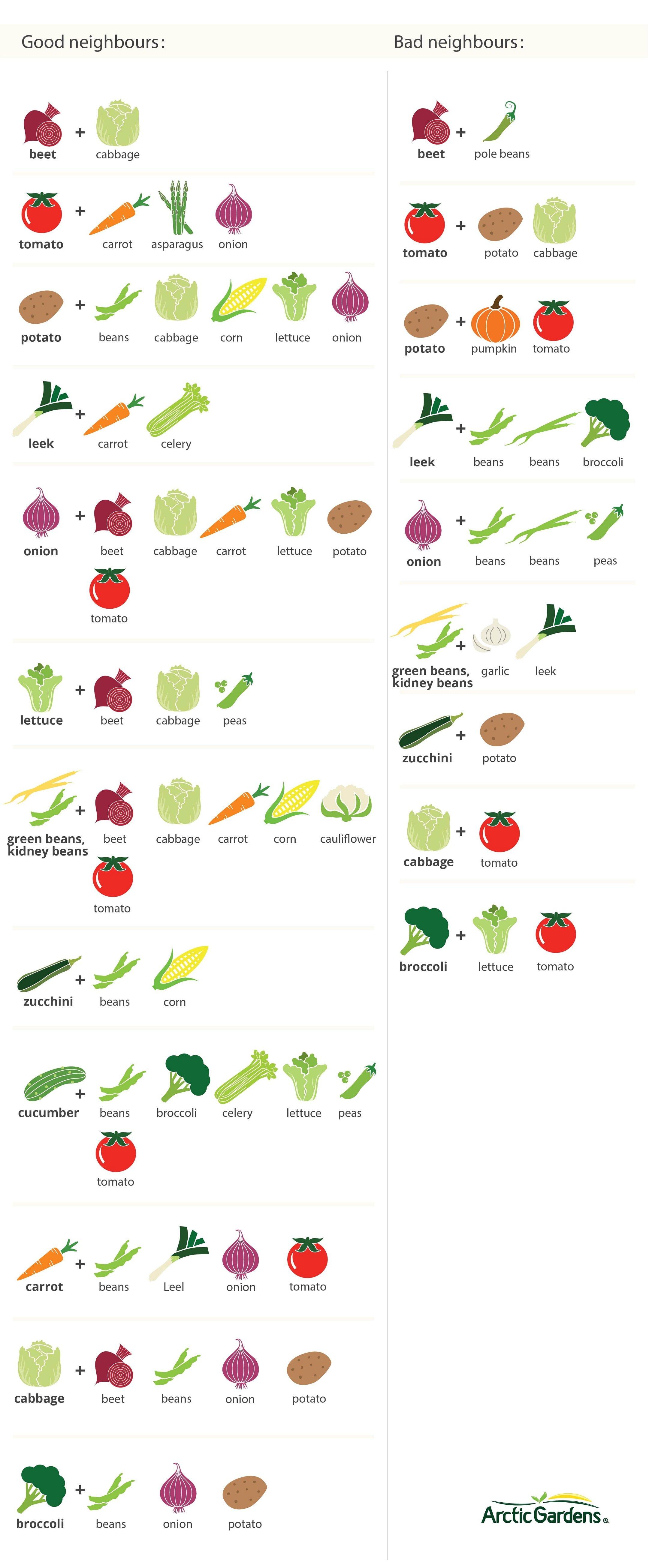 companion_vegetables