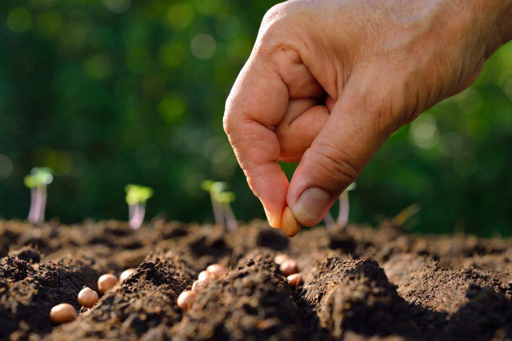 Semer ou planter : le bon moment