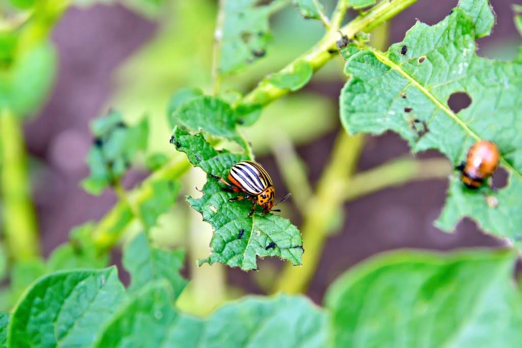 Insectes et mauvaises herbes au jardin