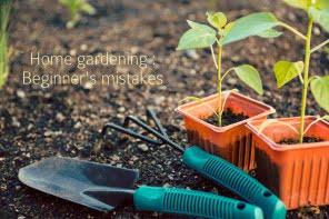 Home gardening : Beginner's mistakes