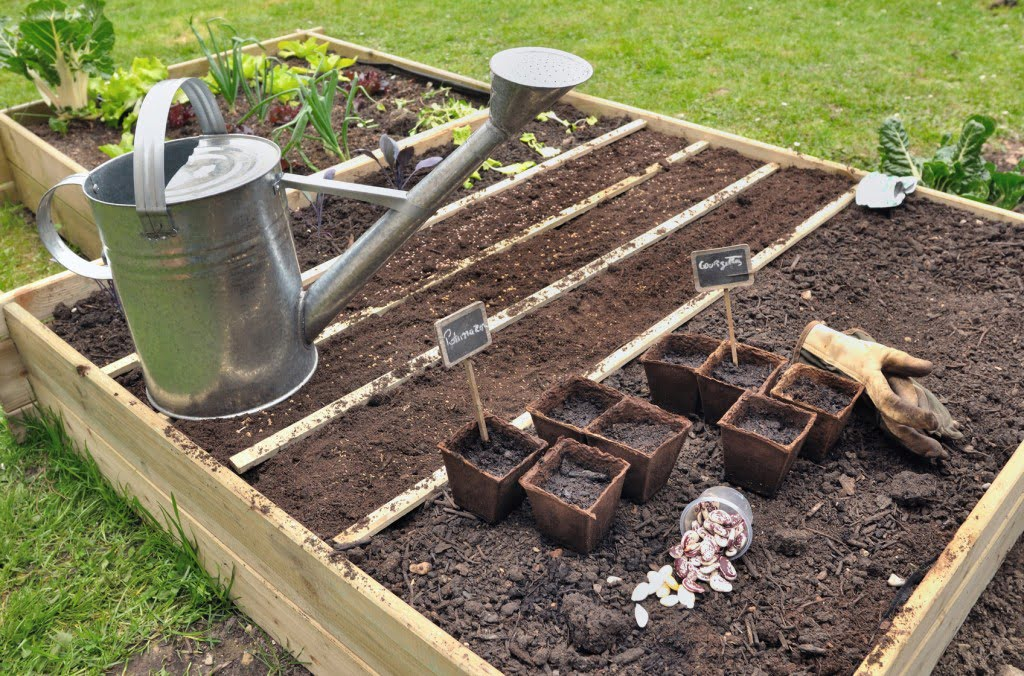 L gumes faciles cultiver arctic gardens for Organiser son jardin potager