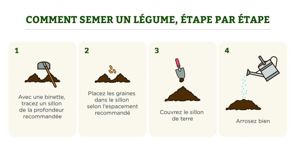 Comment semer un légume, étape par étape