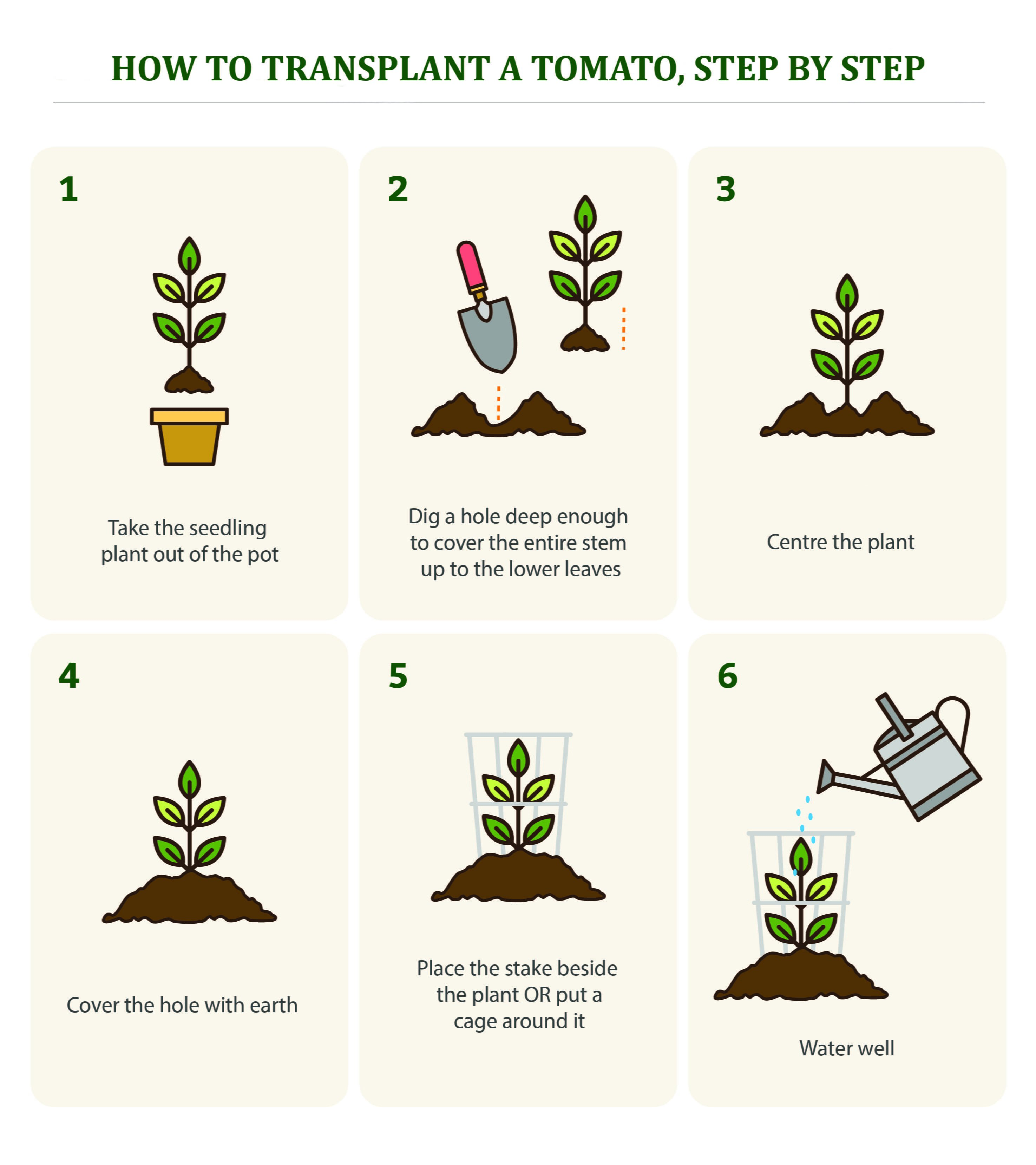 How To Design A Flower Garden Step By Step; Steps Of Plant