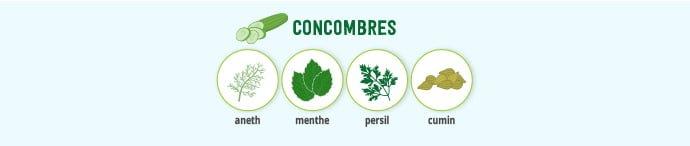 Concombre & épices