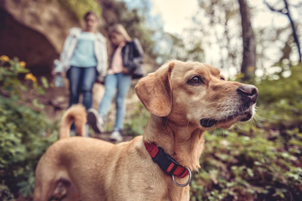 randonnée avec chien