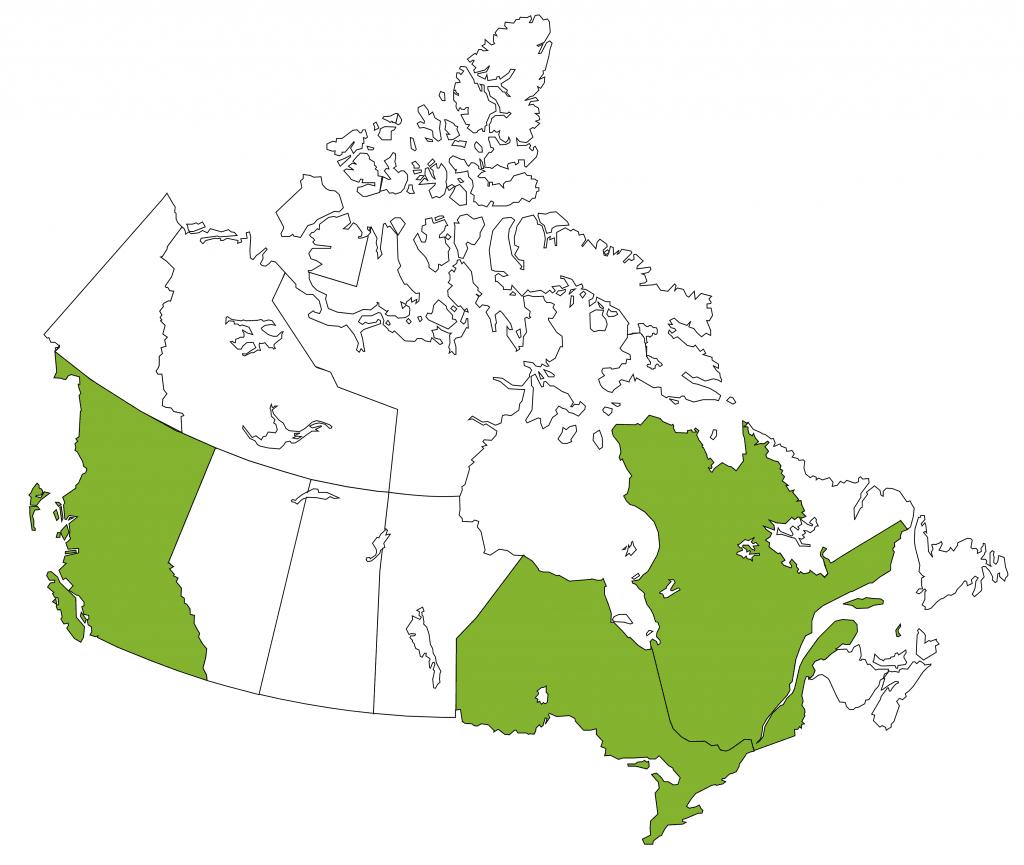 Culture Chou de Bruxelles - Canada