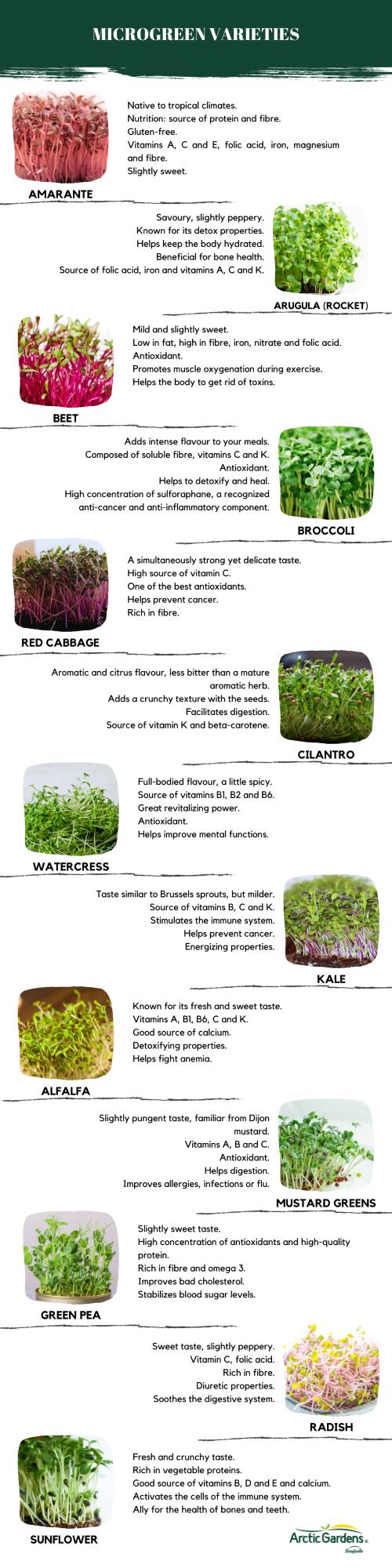 microgreen-varieties