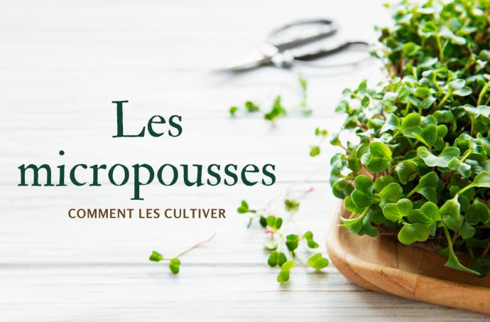 micropousses-comment-cultiver
